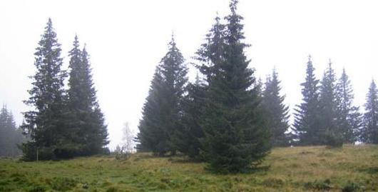 Naturen på Østre Toten