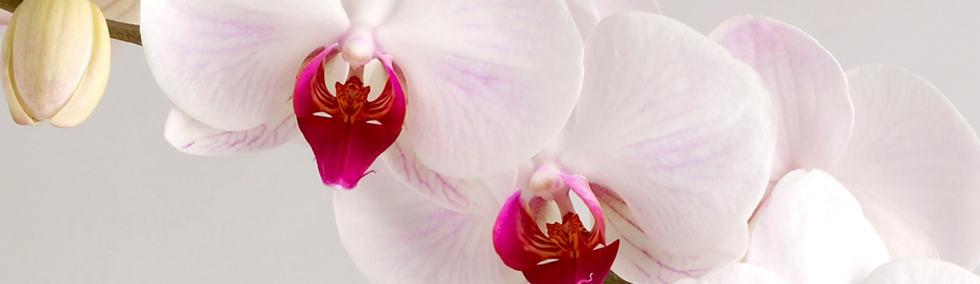 OrkideeDekor