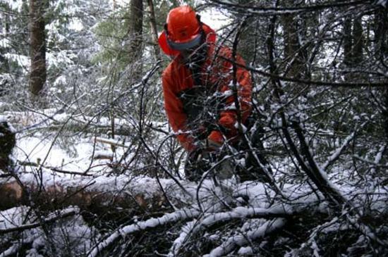 Skogsarbeider kvister en tømmerstokk
