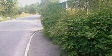 Stor hekk gjør veikryss oversiktelig