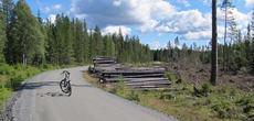 Sykkel på skogsbilvei