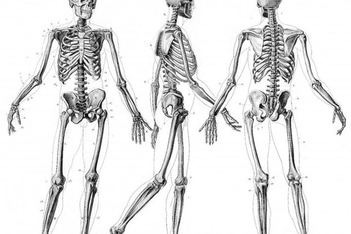 skeleton-690x578_640x536