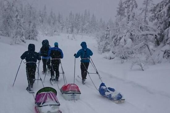 Fire personer på ski, tre av dem med pulk