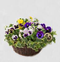 150223_blomster_plante_planter