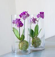 999042_blomster_plante_planter