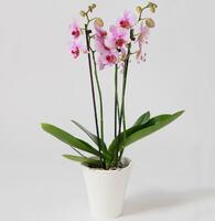 999369_blomster_plante_planter2