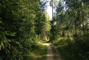 Rekreasjon: Dørstokkmila blir ikke lang med slike skoger utenfor stuedøra. (Foto: Marianne Røhme)