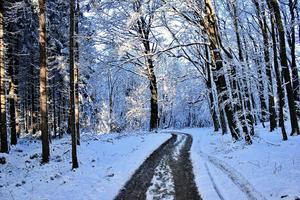 Vinter i skogen - Foto butkovicdub - Morguefile.com_300x200.jpg