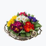170148_blomster_plante_planter