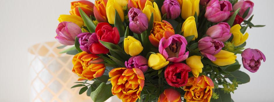 Fargerike tulipanbukett vinter 2016