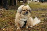 høring vedr innføring av utvidet båndtvang for hund