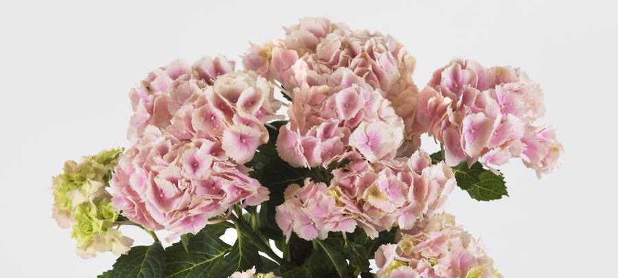 Blomster til alle anledninger