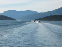 Kø i Gratangsfjorden