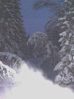 Vinterskogkjerringa