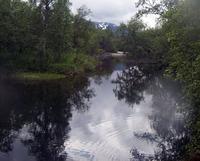 Ørreten vaker ved elvebredden