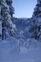 Vinterskog i Øvre Salangen