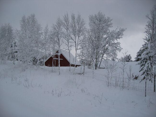endelig vinter