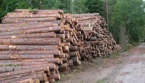 Tømmer.jpg