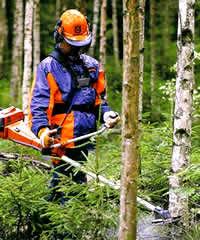 Rydding av skog.jpg