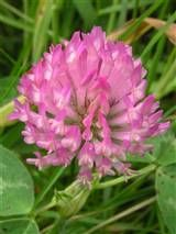 Blomst .jpg