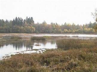Våtmarksområde.jpg