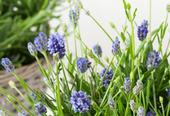 LavendelDekor