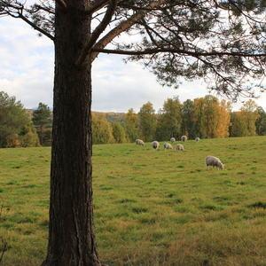 Jordbruksarealer