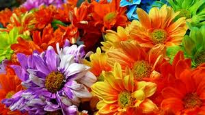 Blomst.jpeg