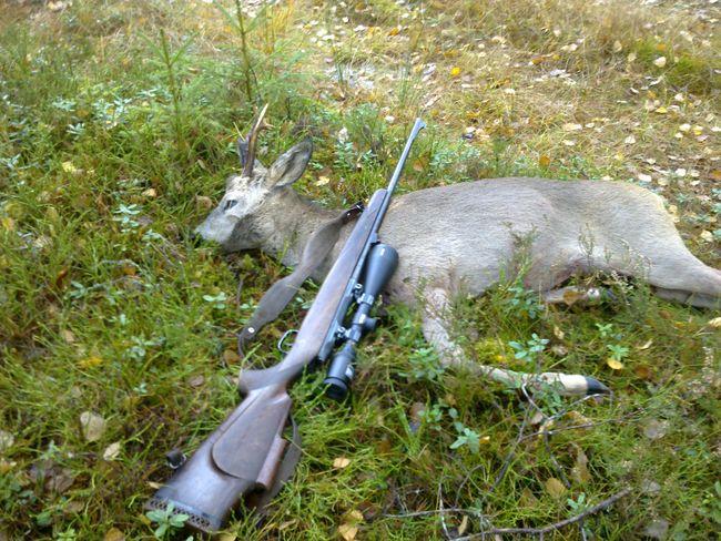 Jakt, rifle, hjort