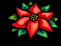 julstjerne