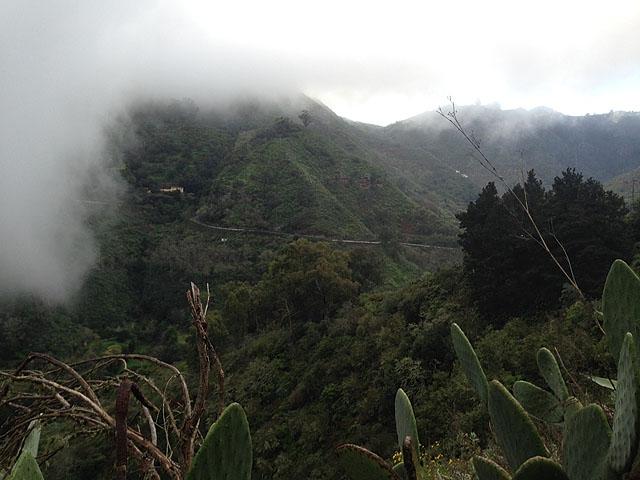kaktus_groenne_fjellandskap_bilde_4.jpg