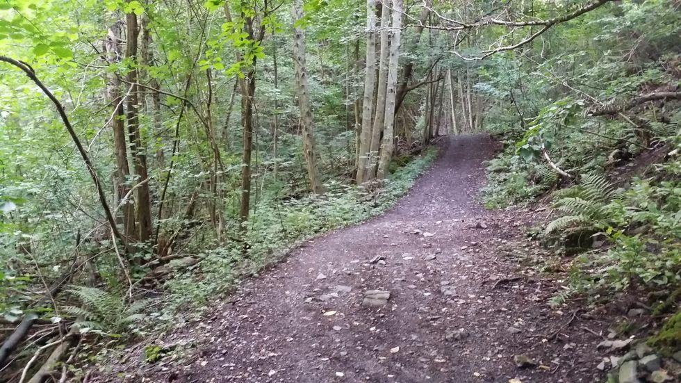 EcoTrail_skog