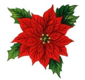 julestjerne