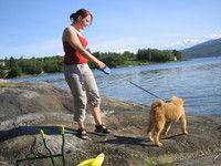 Båndtvang for hund