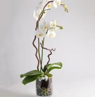 999368_blomster_plante_planter