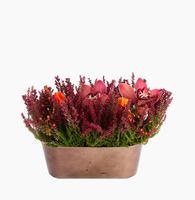 160385_blomster_plante_planter