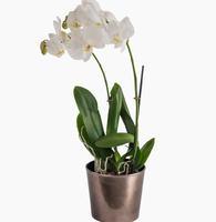 999621_blomster_plante_planter