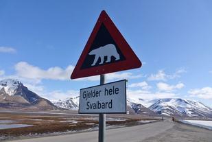 Isbjørnskilt (1030x686)