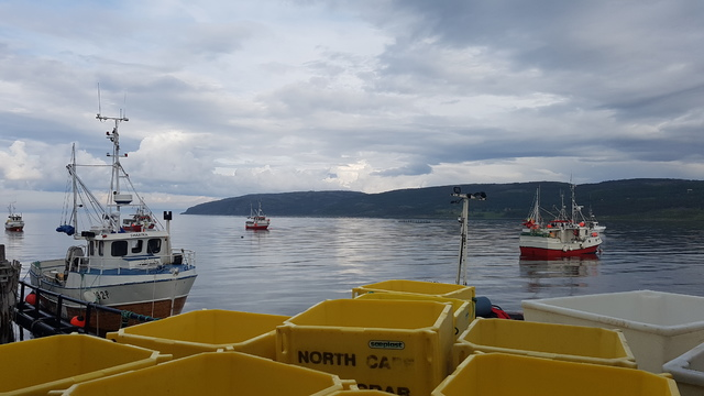 Fiskeri Porsangerfjorden.jpg