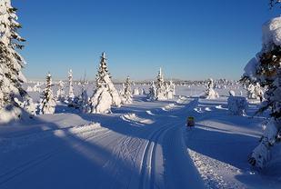 Appelsinhaugen er Stenfjellrunden høyeste punkt, og her svinger 42,5 km  til høyre mens 23 km går rett fram. (Foto: Stein Arne Negård)