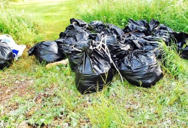 søppeal, ryddeaksjon