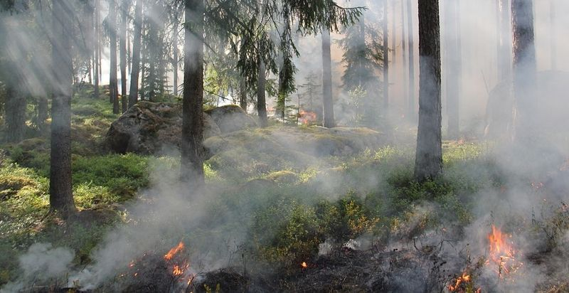 Illustrasjonsbilde som viser begynnende brann i en skog med trær og lyng.