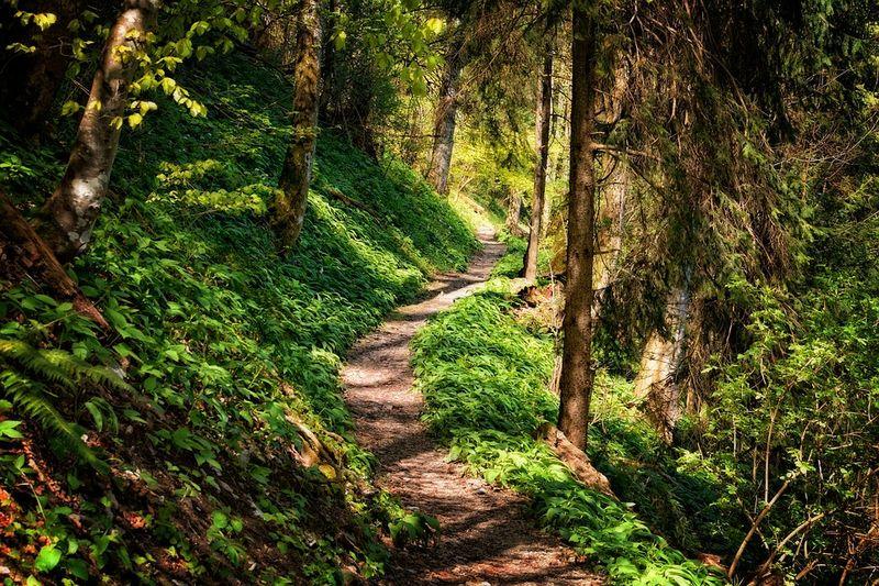 Tursti i skogen