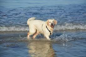 Hund bader.jpg