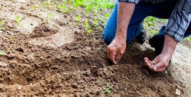 Illustrasjonsbilde av en person som graver i jord.