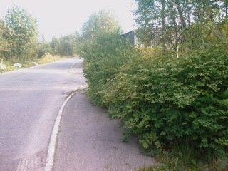 Frisikt busker trafikksikkerhet