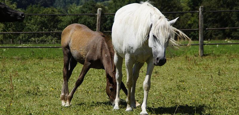 Bilde av hester, foto:Pixabay