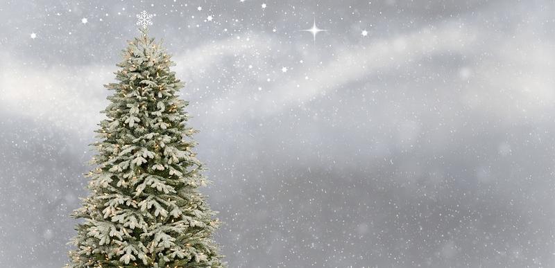Bildet av et tre ute i naturen med julelys på.