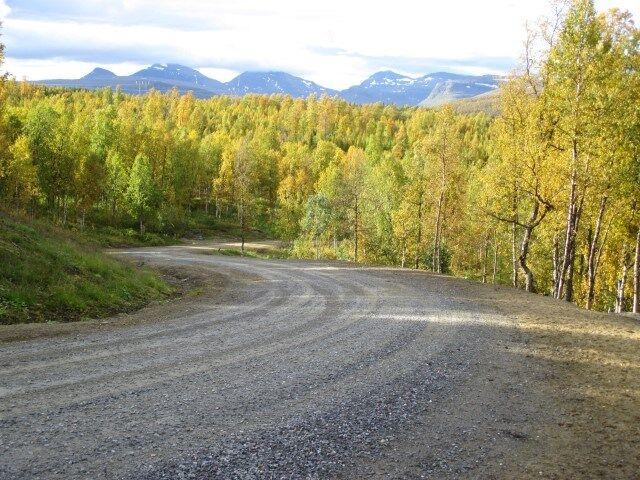 skogsveier