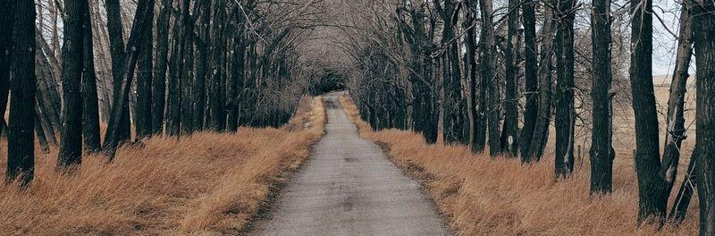 Bildet viser en lang grusvei med trær på begge sider.